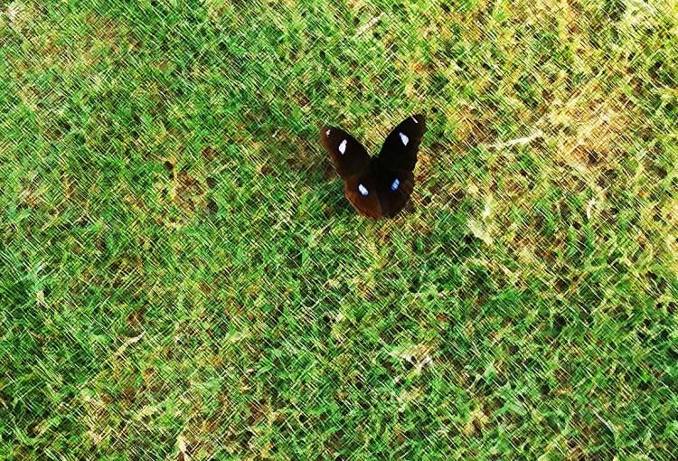 butterflyArt